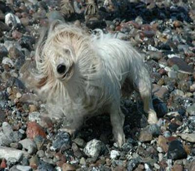 nasserhund